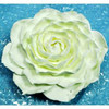 10584-A-GUMPASTE-CABBAGE-ROSE-WHITE-MCCALLS.jpg